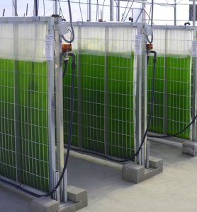 Fotobioreactores de 200lt. cada uno.