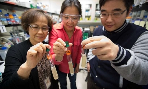 NREL scientists Pin-Ching Maness (left), Katherine J. Chou and Wei Xiong hold test tubes containing the bacterium Clostridium thermocellum. Credit: Amy Glickson / NREL