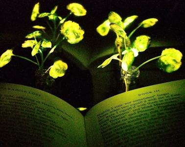 plantas nanobiónicas